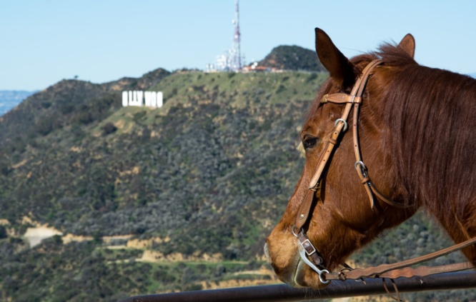 A horse overlooking the Hollywood sign