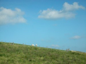 White horses in the Pyrenees