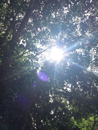 Sunlight through leaves