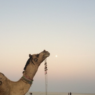 A camel and the moon at the Great Rann of Kutch