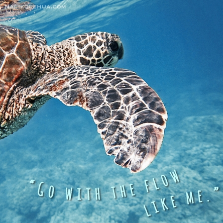 Go with the flow like sea turtles!